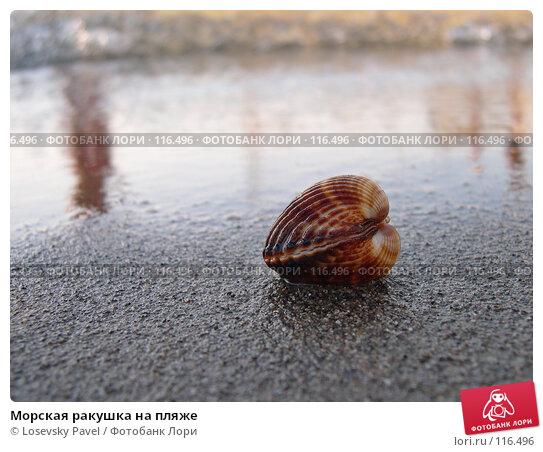 Морская ракушка на пляже, фото № 116496, снято 22 июля 2004 г. (c) Losevsky Pavel / Фотобанк Лори