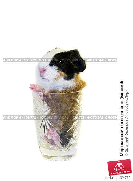 Купить «Морская свинка в стакане (isolated)», фото № 139772, снято 23 декабря 2006 г. (c) Дмитрий Ощепков / Фотобанк Лори