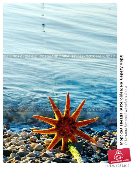 Купить «Морская звезда (Asteroidea) на  берегу моря», фото № 251012, снято 11 июля 2007 г. (c) Татьяна Белова / Фотобанк Лори