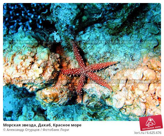 красное море трепанги видео