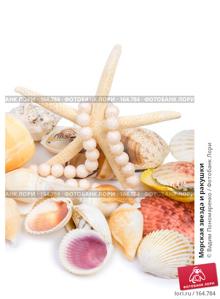 Купить «Морская звезда и ракушки», фото № 164784, снято 16 декабря 2007 г. (c) Вадим Пономаренко / Фотобанк Лори