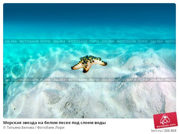 Купить «Морская звезда на белом песке под слоем воды», фото № 266864, снято 18 марта 2008 г. (c) Татьяна Белова / Фотобанк Лори