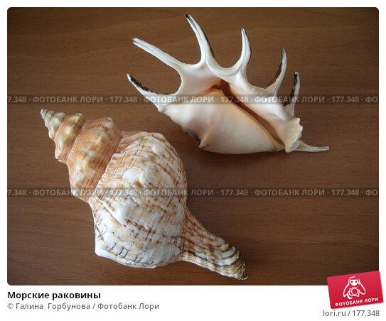 Купить «Морские раковины», фото № 177348, снято 27 августа 2006 г. (c) Галина  Горбунова / Фотобанк Лори
