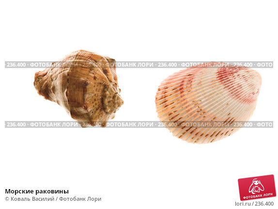 Морские раковины, фото № 236400, снято 23 октября 2016 г. (c) Коваль Василий / Фотобанк Лори