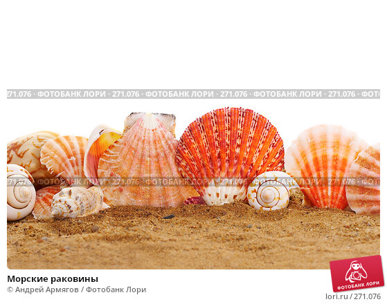 Морские раковины, фото № 271076, снято 20 апреля 2007 г. (c) Андрей Армягов / Фотобанк Лори