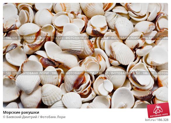 Морские ракушки, фото № 186328, снято 24 января 2008 г. (c) Баевский Дмитрий / Фотобанк Лори
