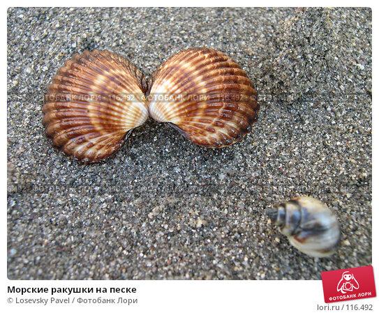 Морские ракушки на песке, фото № 116492, снято 22 июля 2004 г. (c) Losevsky Pavel / Фотобанк Лори