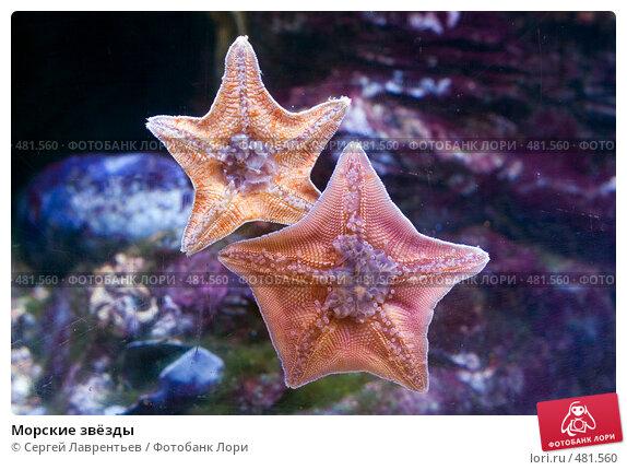 Купить «Морские звёзды», фото № 481560, снято 26 сентября 2008 г. (c) Сергей Лаврентьев / Фотобанк Лори