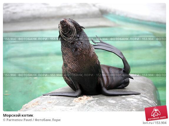 Морской котик, фото № 153904, снято 11 декабря 2007 г. (c) Parmenov Pavel / Фотобанк Лори