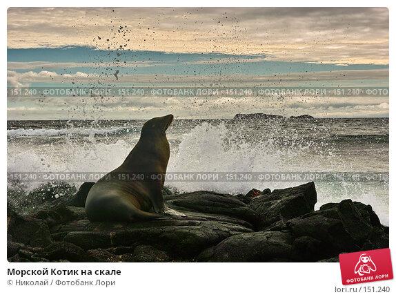 Морской Котик на скале, фото № 151240, снято 5 декабря 2007 г. (c) Николай / Фотобанк Лори