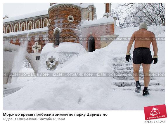 Морж во время пробежки зимой по парку Царицыно, фото № 42256, снято 24 февраля 2006 г. (c) Дарья Олеринская / Фотобанк Лори