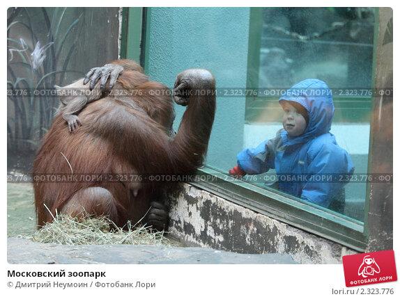 Купить «Московский зоопарк», эксклюзивное фото № 2323776, снято 5 февраля 2011 г. (c) Дмитрий Неумоин / Фотобанк Лори