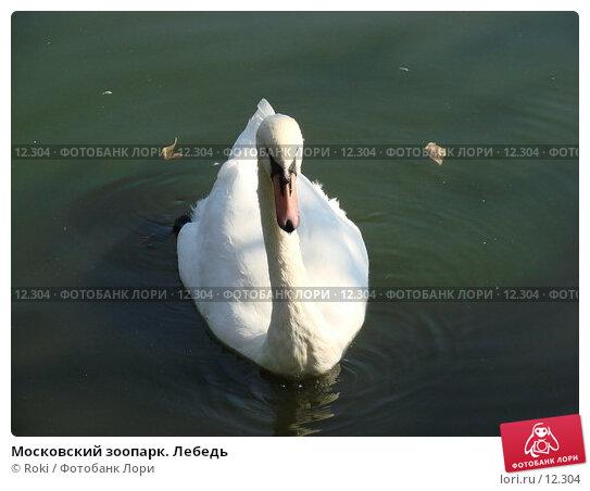 Купить «Московский зоопарк. Лебедь», фото № 12304, снято 24 сентября 2006 г. (c) Roki / Фотобанк Лори