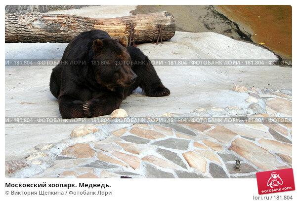 Московский зоопарк. Медведь., фото № 181804, снято 19 сентября 2007 г. (c) Виктория Щепкина / Фотобанк Лори