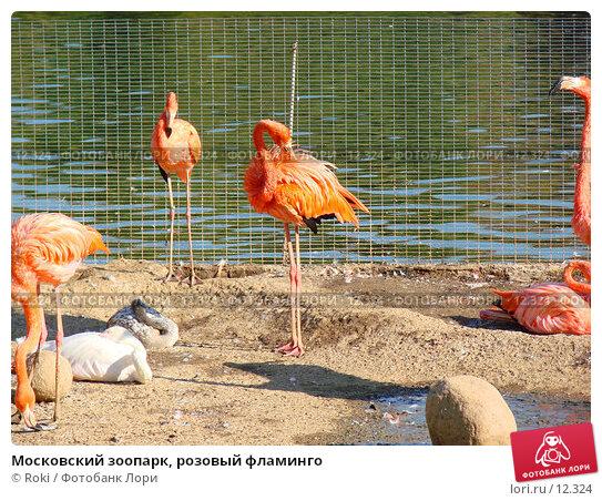 Купить «Московский зоопарк, розовый фламинго», фото № 12324, снято 24 сентября 2006 г. (c) Roki / Фотобанк Лори