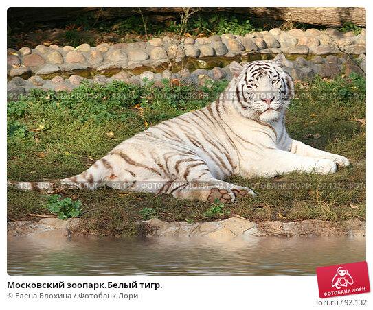 Московский зоопарк.Белый тигр., фото № 92132, снято 2 октября 2007 г. (c) Елена Блохина / Фотобанк Лори