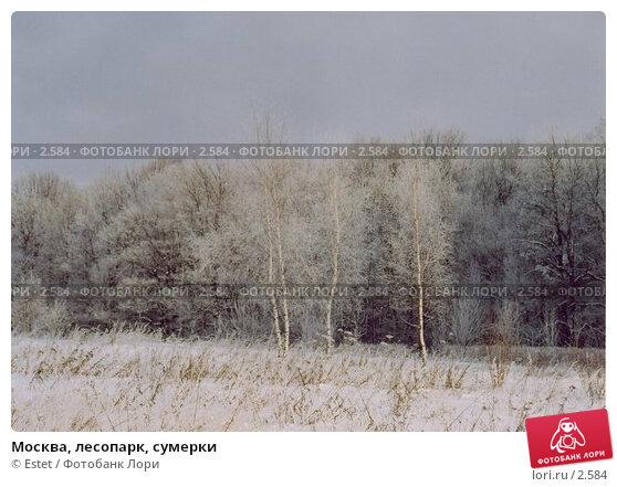 Купить «Москва, лесопарк, сумерки», фото № 2584, снято 18 декабря 2017 г. (c) Estet / Фотобанк Лори