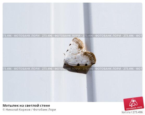 Купить «Мотылек на светлой стене», фото № 273496, снято 3 апреля 2008 г. (c) Николай Коржов / Фотобанк Лори