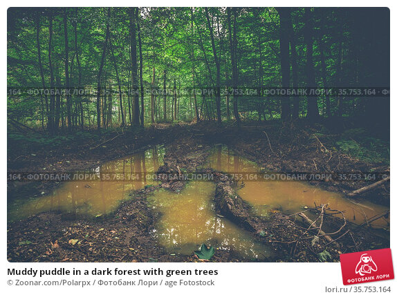 Muddy puddle in a dark forest with green trees. Стоковое фото, фотограф Zoonar.com/Polarpx / age Fotostock / Фотобанк Лори