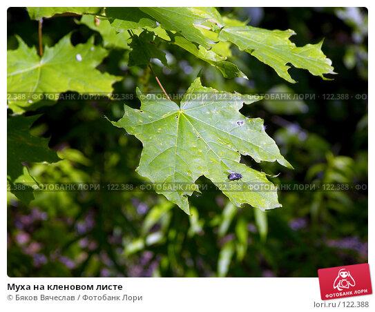 Купить «Муха на кленовом листе», фото № 122388, снято 30 июня 2007 г. (c) Бяков Вячеслав / Фотобанк Лори
