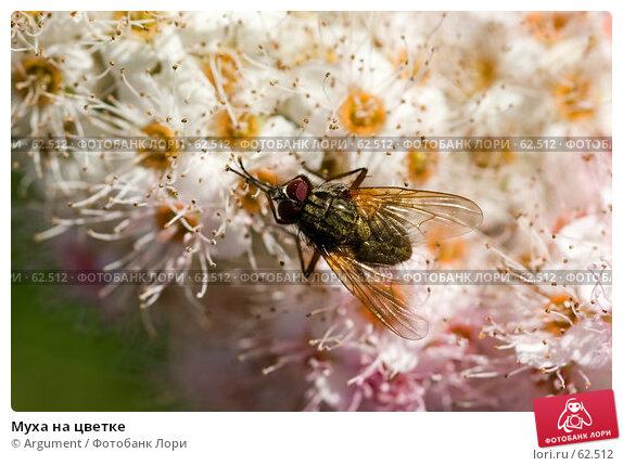 Муха на цветке, фото № 62512, снято 23 июля 2006 г. (c) Argument / Фотобанк Лори