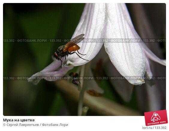 Муха на цветке, фото № 133392, снято 12 июля 2007 г. (c) Сергей Лаврентьев / Фотобанк Лори