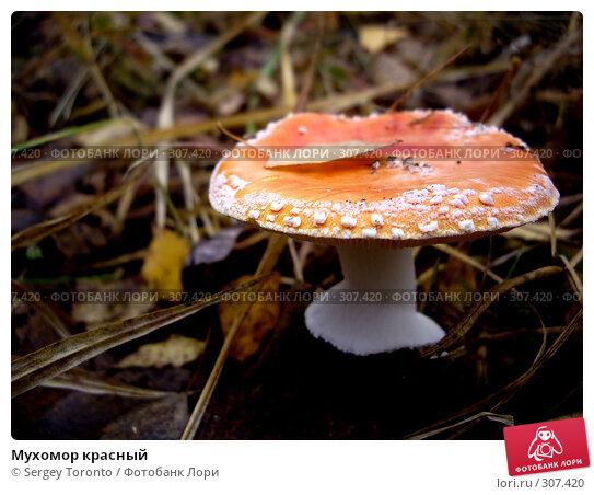 Купить «Мухомор красный», фото № 307420, снято 27 октября 2007 г. (c) Sergey Toronto / Фотобанк Лори