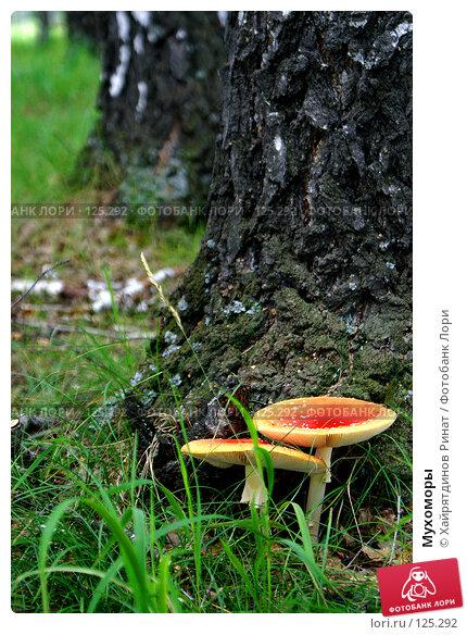 Мухоморы, фото № 125292, снято 23 июля 2007 г. (c) Хайрятдинов Ринат / Фотобанк Лори