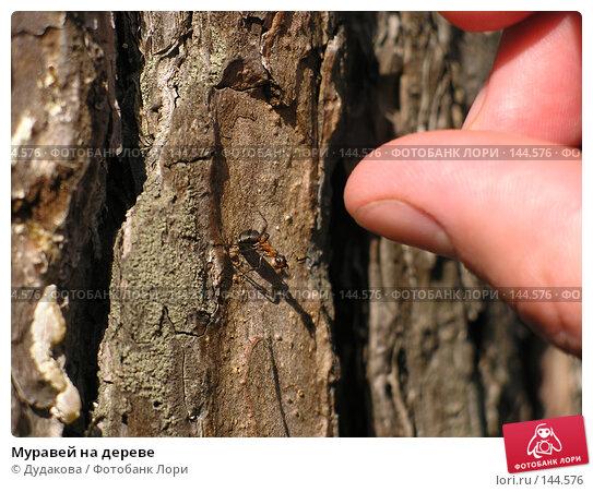Муравей на дереве, фото № 144576, снято 5 мая 2004 г. (c) Дудакова / Фотобанк Лори