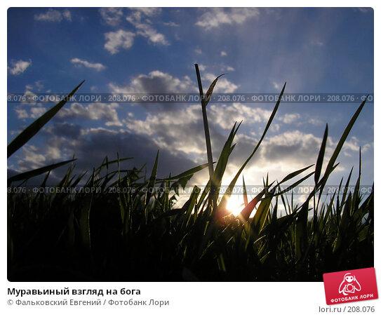 Муравьиный взгляд на бога, фото № 208076, снято 11 мая 2005 г. (c) Фальковский Евгений / Фотобанк Лори