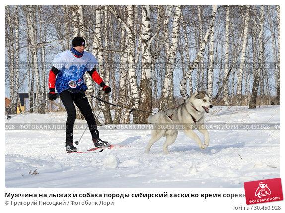 Мужчина на лыжах и собака породы сибирский хаски во время соревнований в рамках праздника Хаскифест-2019 в городе Новосибирске. Редакционное фото, фотограф Григорий Писоцкий / Фотобанк Лори