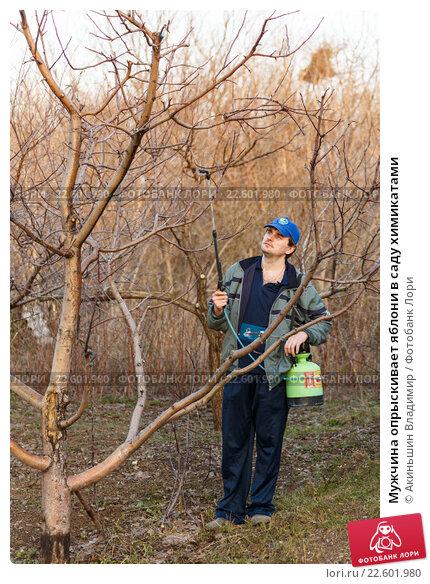 Купить «Мужчина опрыскивает яблони в саду химикатами», фото № 22601980, снято 9 апреля 2016 г. (c) Акиньшин Владимир / Фотобанк Лори