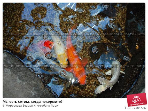 Мы есть хотим, когда покормите?, фото № 206536, снято 26 мая 2007 г. (c) Мирослава Безман / Фотобанк Лори