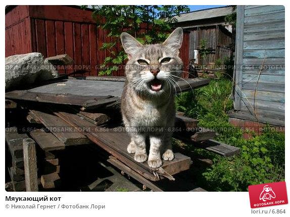 Мяукающий кот, фото № 6864, снято 10 июня 2006 г. (c) Николай Гернет / Фотобанк Лори