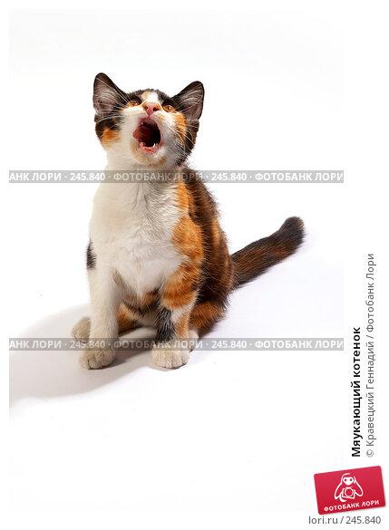 Купить «Мяукающий котенок», фото № 245840, снято 11 декабря 2017 г. (c) Кравецкий Геннадий / Фотобанк Лори