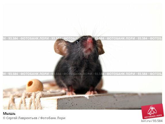 Мышь, фото № 93584, снято 23 сентября 2007 г. (c) Сергей Лаврентьев / Фотобанк Лори
