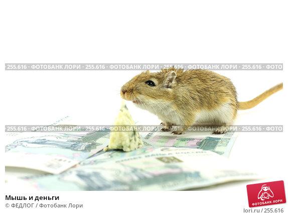 Мышь и деньги, фото № 255616, снято 18 апреля 2008 г. (c) ФЕДЛОГ.РФ / Фотобанк Лори
