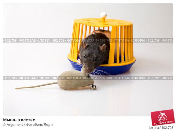 Купить «Мышь в клетке», фото № 102708, снято 16 декабря 2017 г. (c) Argument / Фотобанк Лори
