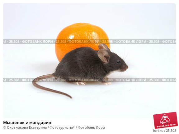 Мышонок и мандарин, эксклюзивное фото № 25308, снято 18 марта 2007 г. (c) Охотникова Екатерина *Фототуристы* / Фотобанк Лори