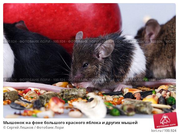 Мышонок на фоне большого красного яблока и других мышей, фото № 100924, снято 23 сентября 2007 г. (c) Сергей Лешков / Фотобанк Лори