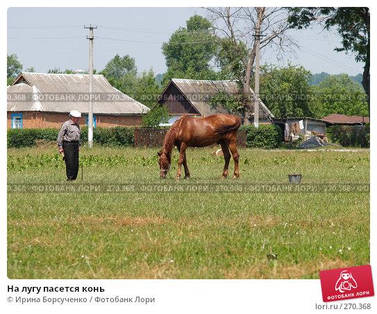 На лугу пасется конь, фото № 270368, снято 17 июня 2007 г. (c) Ирина Борсученко / Фотобанк Лори