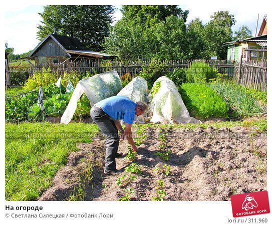 Купить «На огороде», фото № 311960, снято 21 июля 2007 г. (c) Светлана Силецкая / Фотобанк Лори