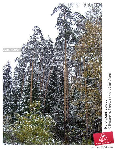 На окраине леса, фото № 161724, снято 16 октября 2007 г. (c) Владимир Тарасов / Фотобанк Лори