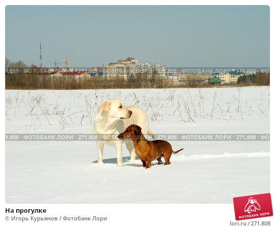 На прогулке, фото № 271808, снято 2 мая 2008 г. (c) Игорь Курьянов / Фотобанк Лори
