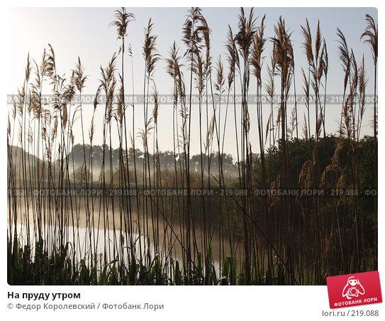 На пруду утром, фото № 219088, снято 28 июля 2017 г. (c) Федор Королевский / Фотобанк Лори
