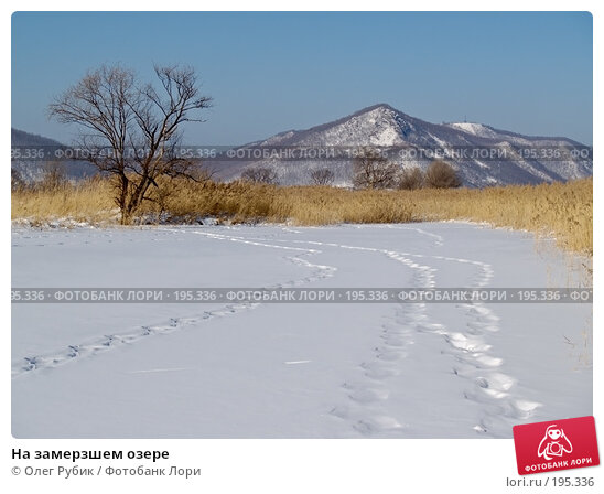 На замерзшем озере, фото № 195336, снято 27 января 2008 г. (c) Олег Рубик / Фотобанк Лори