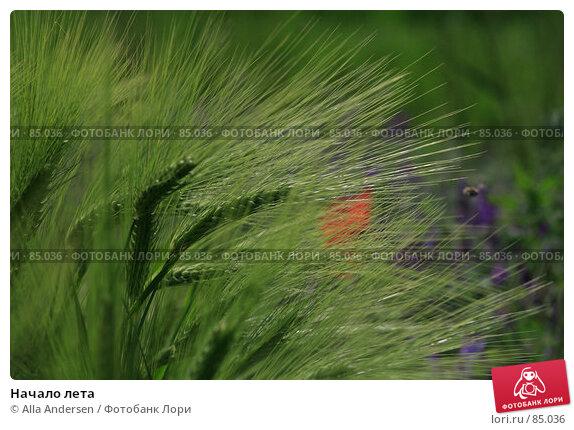 Начало лета, фото № 85036, снято 29 мая 2007 г. (c) Alla Andersen / Фотобанк Лори