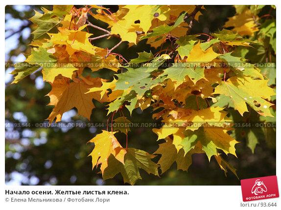 Начало осени. Желтые листья клена., фото № 93644, снято 23 сентября 2007 г. (c) Елена Мельникова / Фотобанк Лори