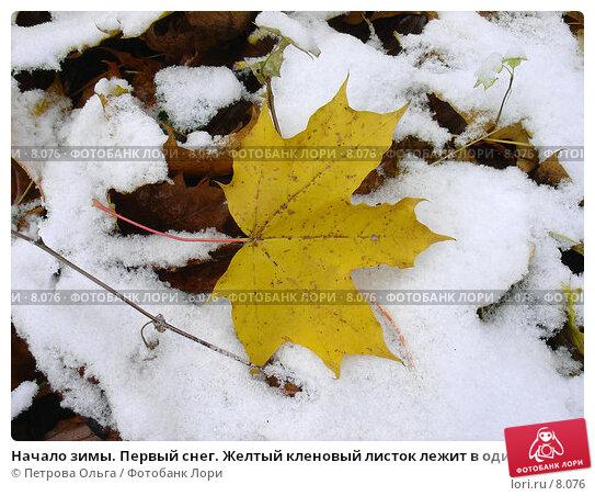 Начало зимы. Первый снег. Желтый кленовый листок лежит в одиночестве на снегу, фото № 8076, снято 28 октября 2005 г. (c) Петрова Ольга / Фотобанк Лори