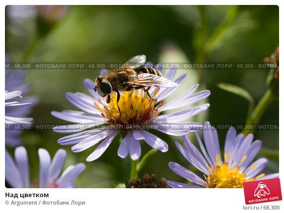 Купить «Над цветком», фото № 68300, снято 7 сентября 2006 г. (c) Argument / Фотобанк Лори